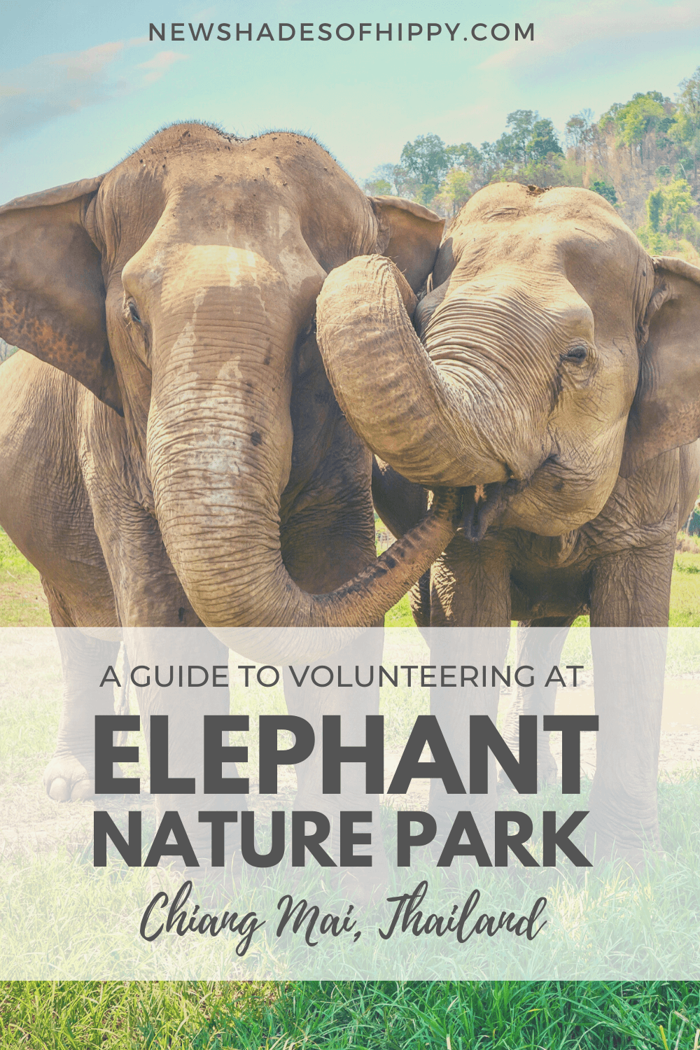 Two elephanrs stood together with text: A guide to volunteering at Elephant Nature Park Chiang Mai, Thailand