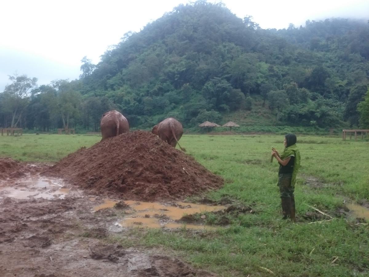 Lek Chailert stood watching elephants in field.