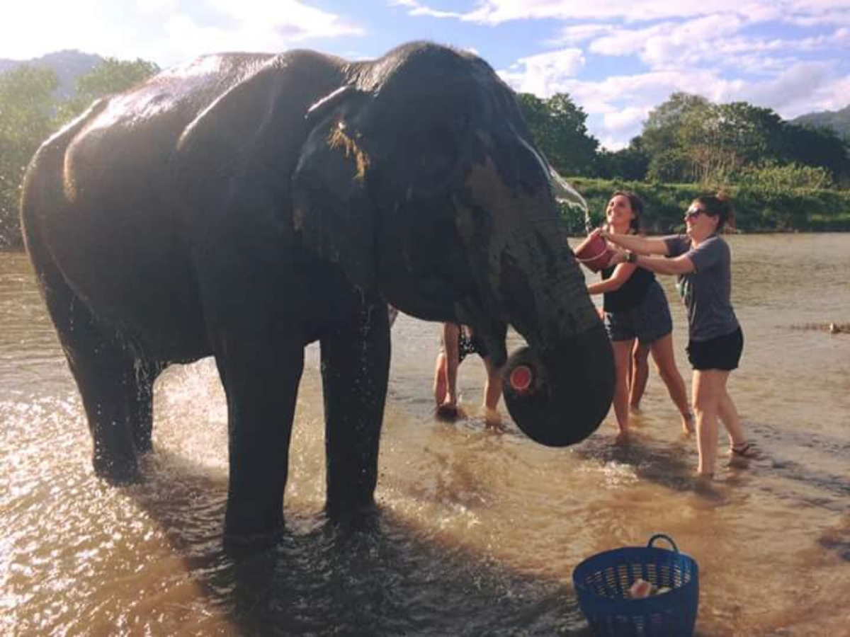 Two young women bathing elephant in river.