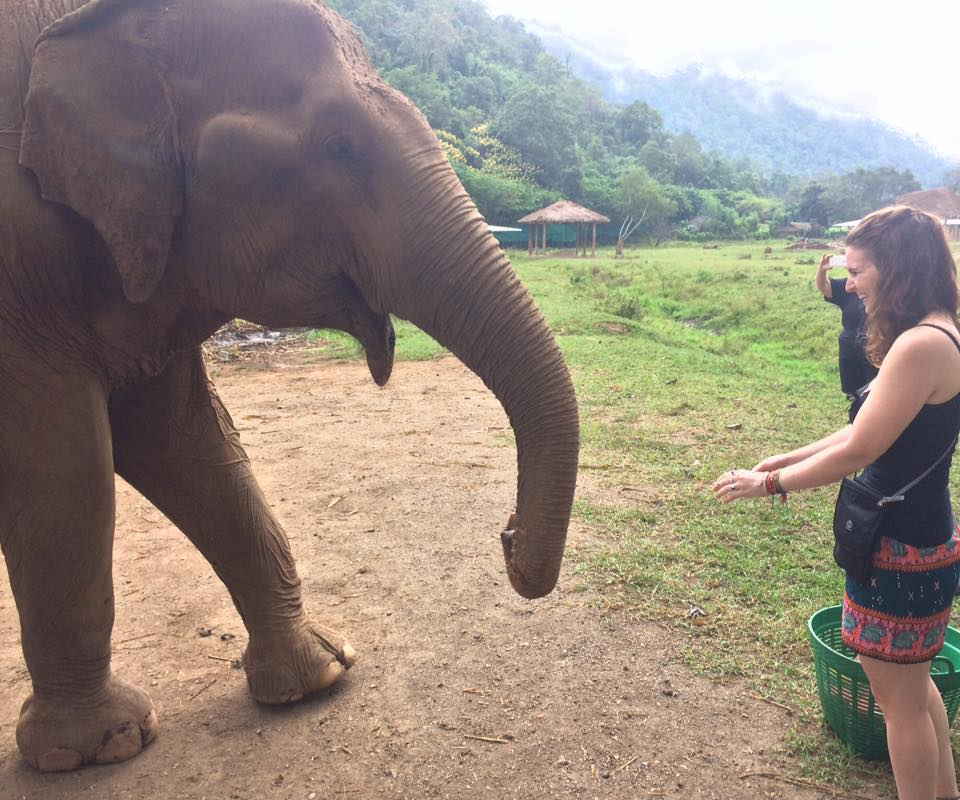 Eye to eye with elephants in Thailand