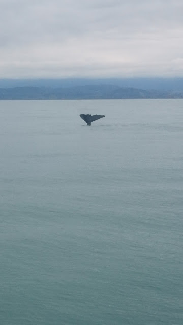Whale Watching Kaikoura - New Zealand Nature Lovers
